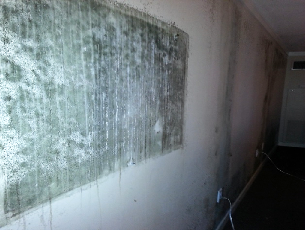 Blog de pureti el poder de la luz para limpiar el aire - Limpiar moho pared pintada ...